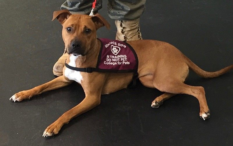 service dog laws College for Pets