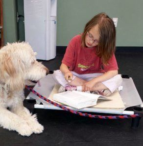 therapy dog training College for Pets