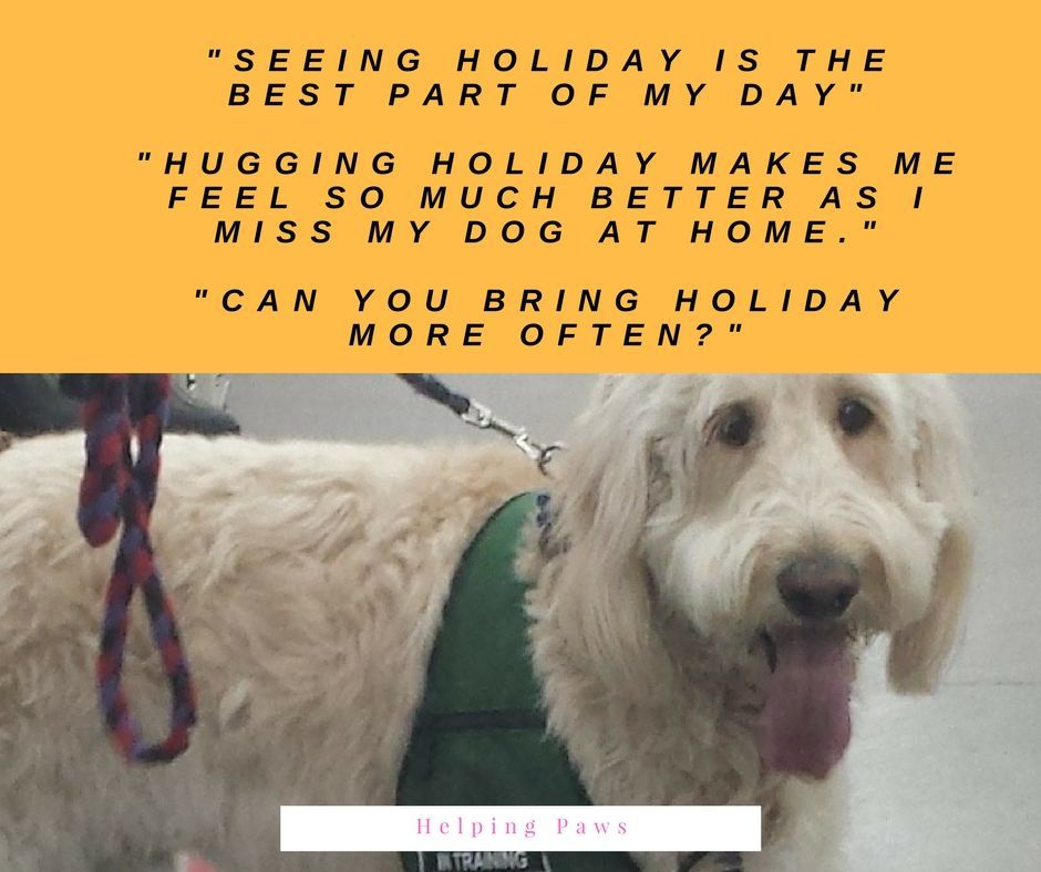 therapy dog training College for Pets Plymouth NH
