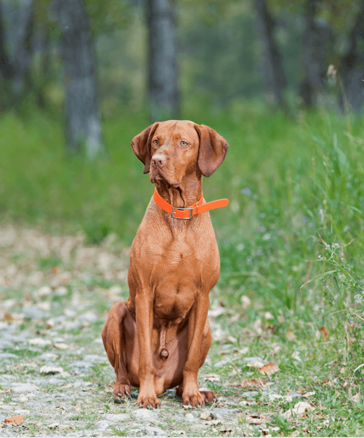 Training Your Dog to Go to a Spot