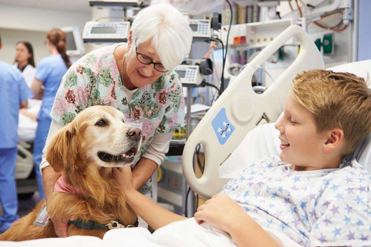 Training dogs to provide emotional support
