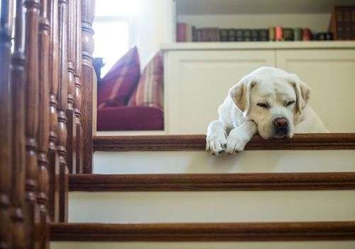 Using stairs for exercising your dog